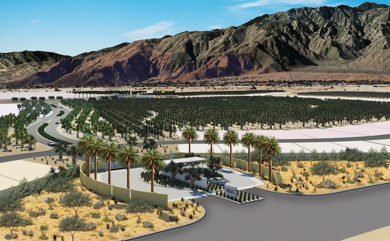 A rendering of the olive groves at Miralon
