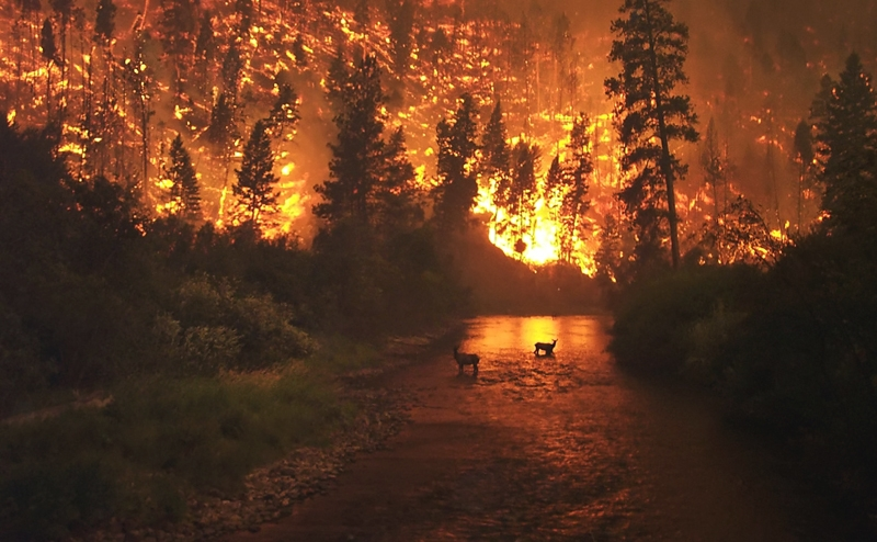 Fire resistance of metal cladding is an asset in wildfire-prone areas