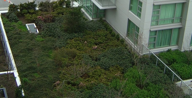 Florida lagging on development of green roofs