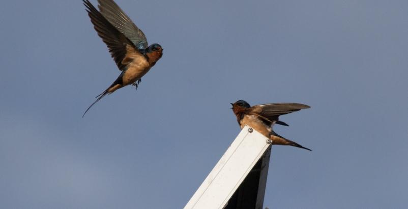 San Jose adopts bird-friendly building standard