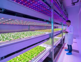 Philips sheds new light on growing fresh food indoors