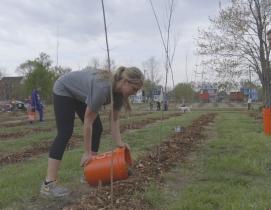 Hantz Woodlands brings thousands of trees to hard-pressed Detroit neighborhoods